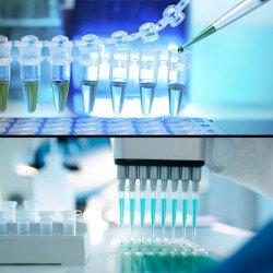Drug Screenings