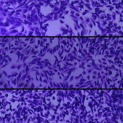 _________________________ Cell Proliferation _________________________